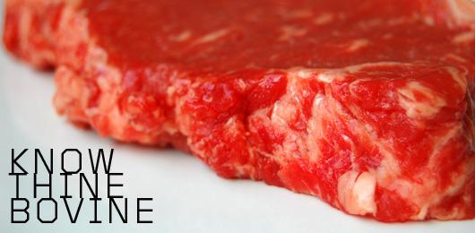 Beef header