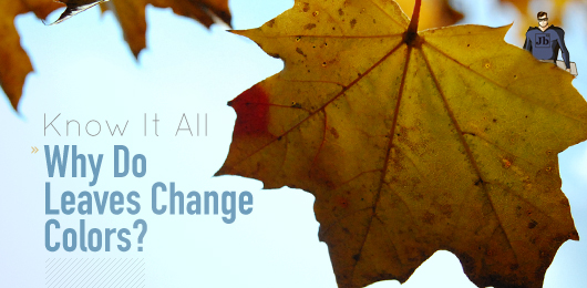 Know It All: Why Do Leaves Change Colors?