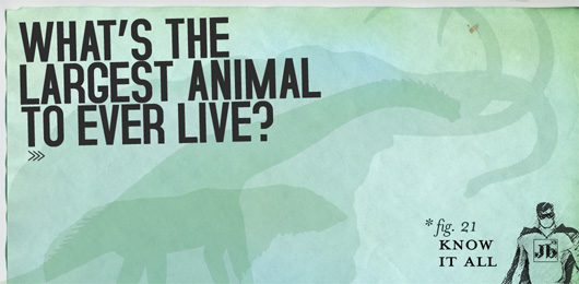 Know It All: What's the Largest Animal to Ever Live?