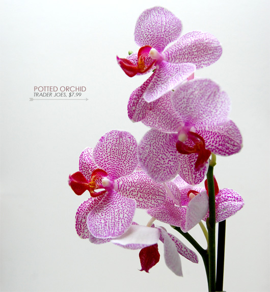 pink potted orchids