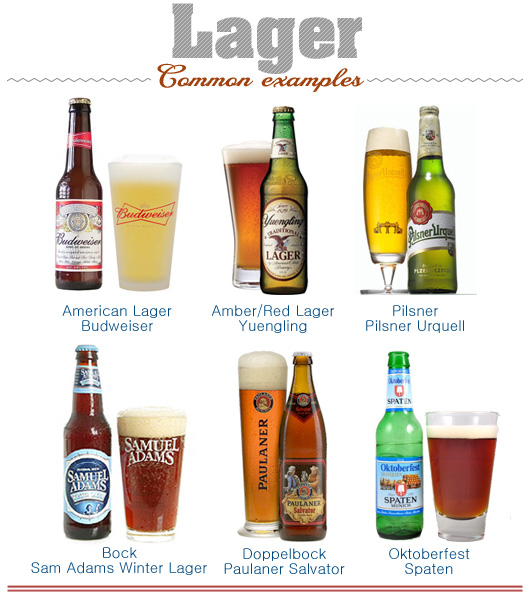 Illustration of common examples of lager beer