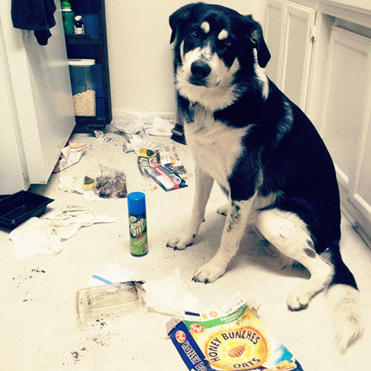 A dog sitting next to trash