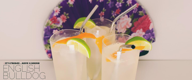 english bulldog drinks with gin