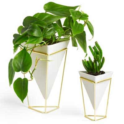2 modern planters with plants in them