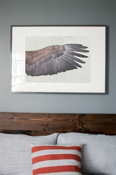 Wing of a White-Tailed Eagle, 19 3/4″ x 27 1/2″