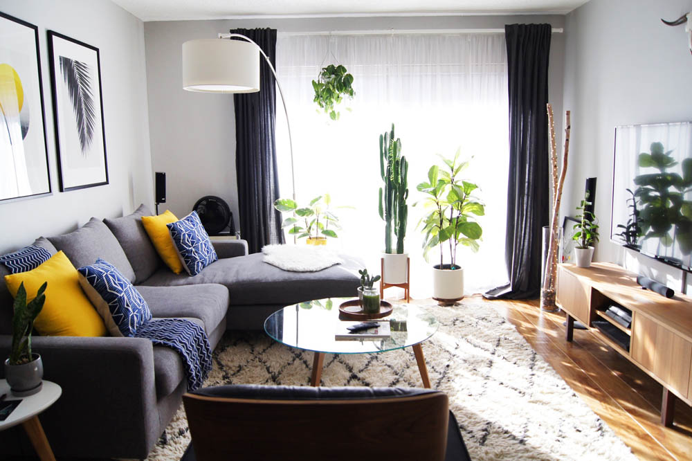 apartment with plants in window   snake plant, rubber plant, fiddle leaf