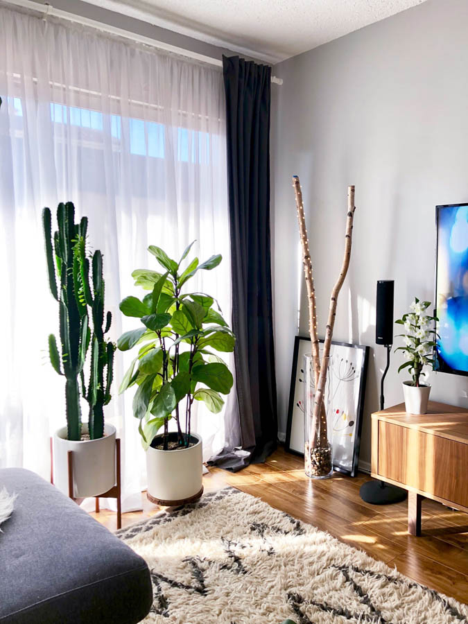 plants in apartment window euphorbia, fiddle leaf fig, orchid in bloom