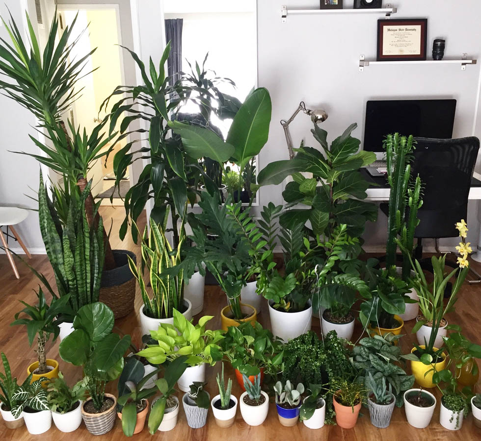 best house plants for apartments