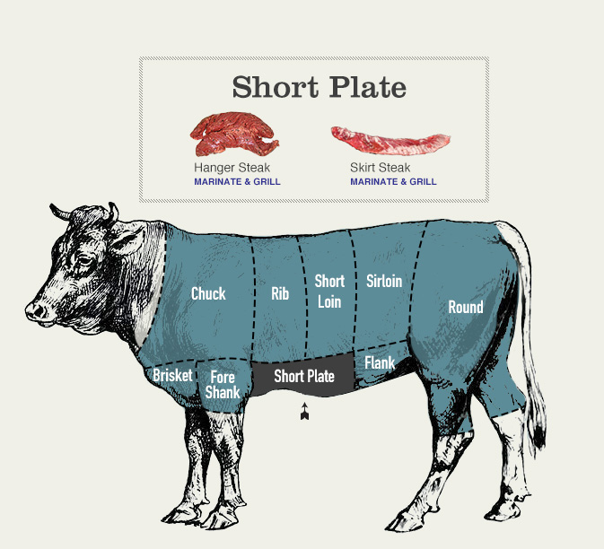 beef cuts diagram of short plate cow section