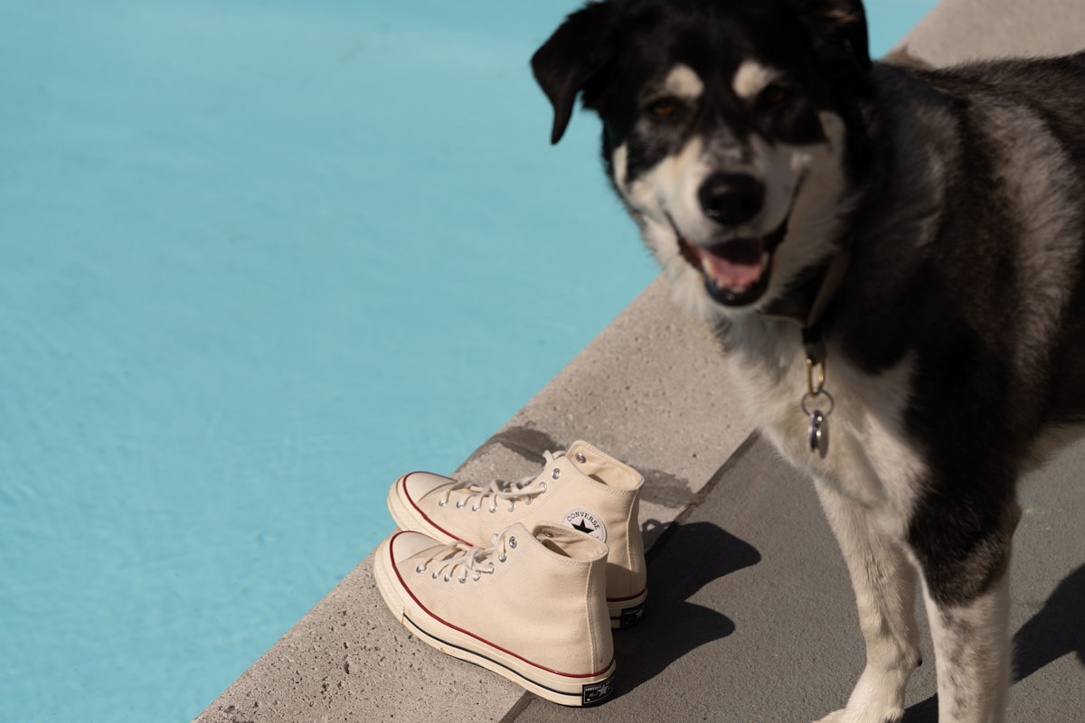 converse 70 high top parchment with smiling dog